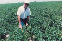 Cotton farmer Howard Wuertz