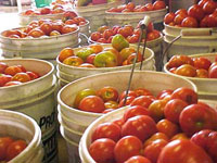 Baskets of tomatoes.