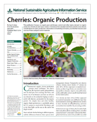 Cherries: Organic Production
