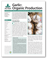 Garlic: Organic Production