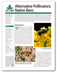Alternative Pollinators: Native Bees