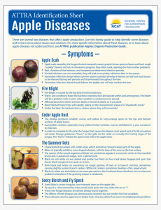 Apple Diseases Identification Sheet