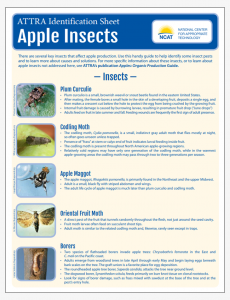 Apple Insect Pests Identification Sheet