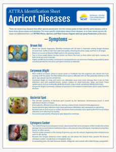 Apricot Diseases Identification Sheet