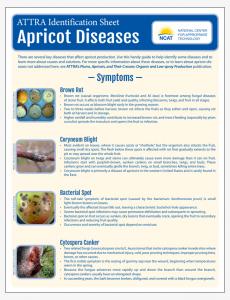 Apricot Diseases Identification Sheet
