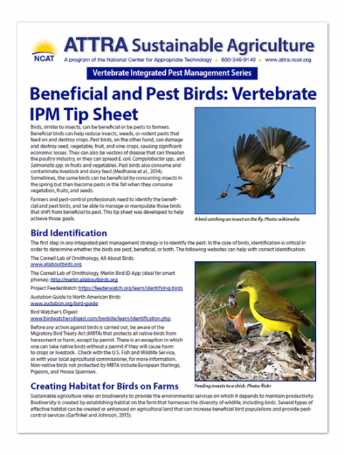 Pest and Beneficial Birds Tipsheet
