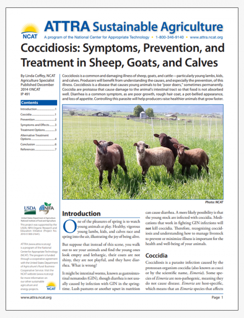 Coccidiosis: Symptoms, Prevention, and Treatment in Sheep, Goats, and Calves
