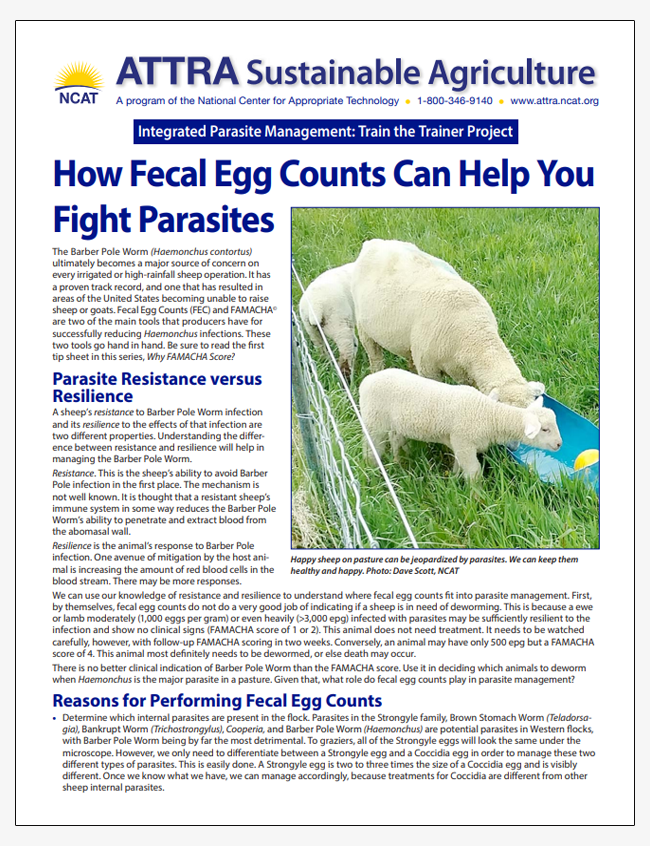 How Fecal Egg Counts Can Help You Fight Parasites