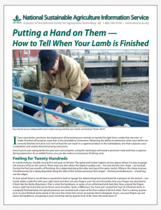 Putting a Hand on Them - How to Tell When Your Lamb is Finished