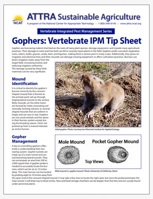 Gophers: Vertebrate IPM Tip Sheet