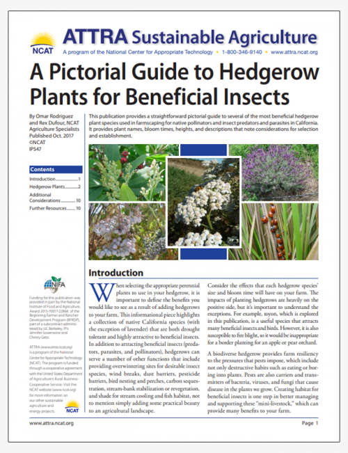 A Pictorial Guide to Hedgerow Plants for Beneficial Insects