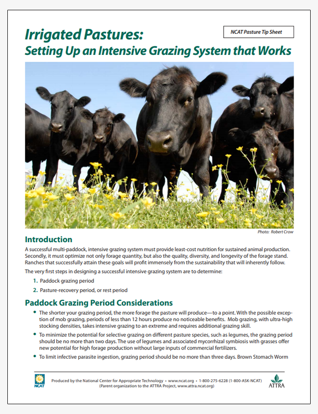Irrigated Pastures: Setting Up an Intensive Grazing System That Works