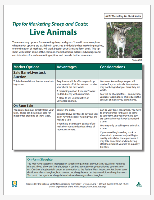 Tips for Marketing Sheep and Goat Products: Live Animals