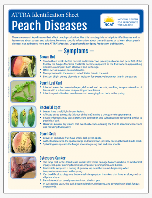 Peach Diseases Identification Sheet