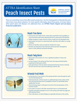Peach Insect Pests Identification Sheet