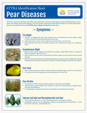 Pear Diseases Identification Sheet