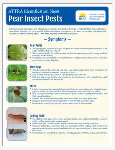 Pear Insect Pests Identification Sheet