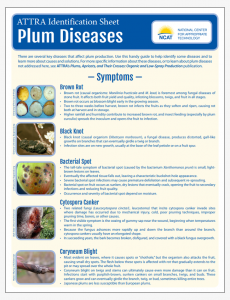 Plum Diseases Identification Sheet
