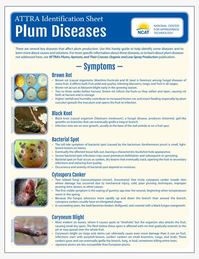 Plum Diseases Identification Sheet