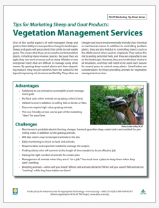 Tips for Marketing Sheep and Goat Products: Vegetation Management Services