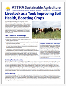 Livestock as a Tool: Improving Soil Health, Boosting Crops
