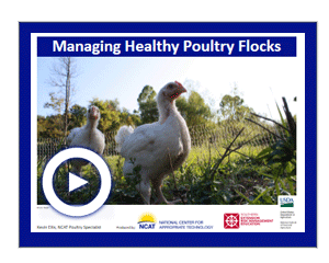 Biosecurity Poultry Video