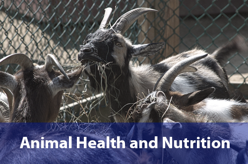 animal-health-nutrition