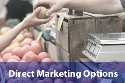 direct-marketing-options