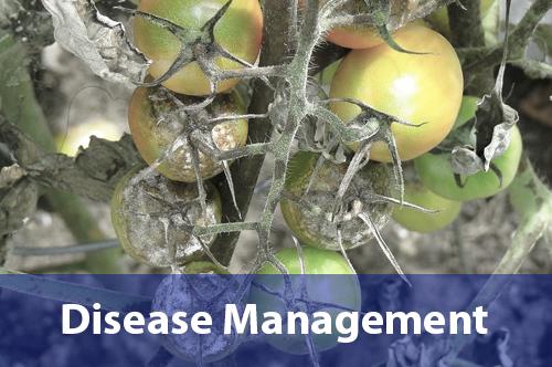 disease-management