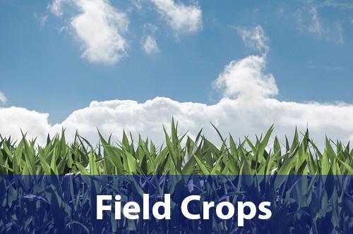field-crops