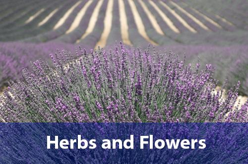herbs-flowers