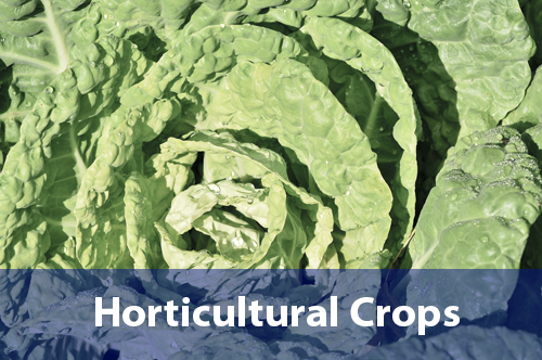 horticultural-crops