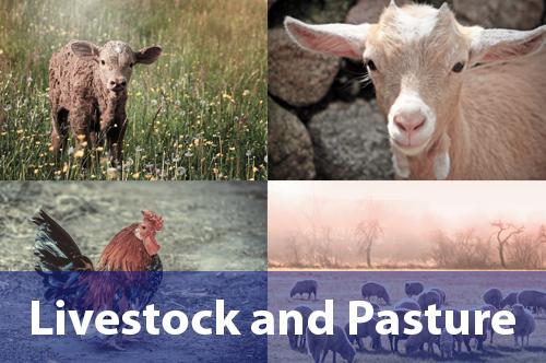 livestock-pasture