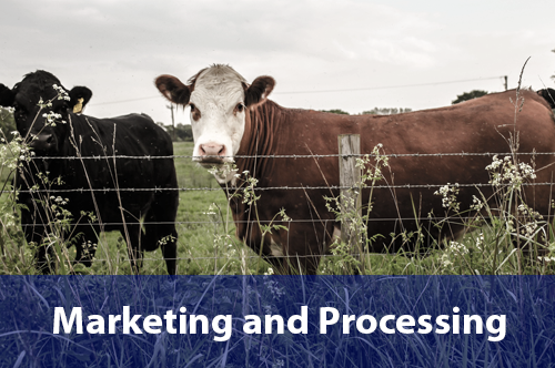 marketing-processing
