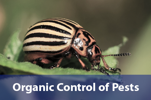 organic-control-of-pests
