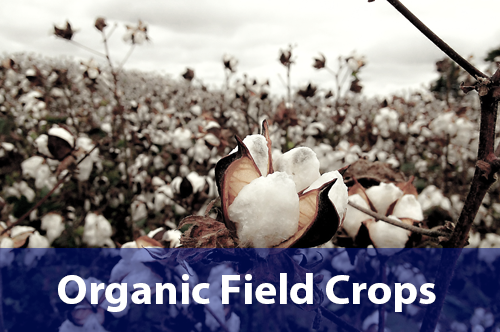 organic-field-crops