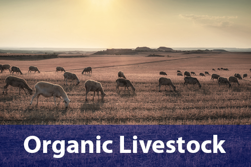 organic-livestock