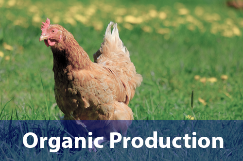 organic-production-livestock-pasture