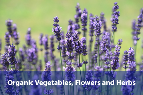 organic-vegetables-flowers-herbs