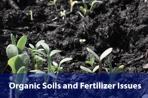 organic-soils-fertilizers-issues