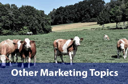 other-marketing-topics