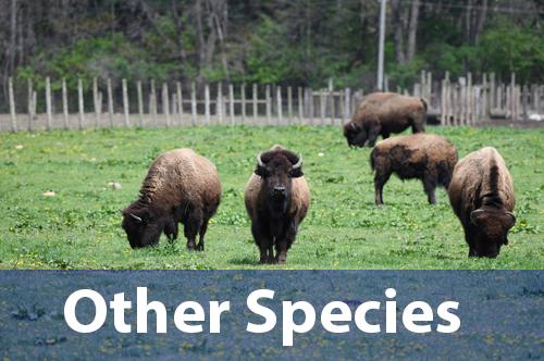 other-livestock-species