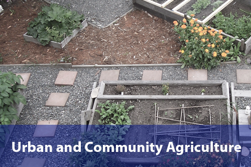 urban-community-agriculture