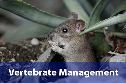 vertebrate-management