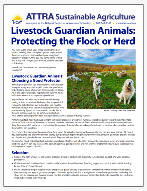 Livestock Guardian Animals: Protecting the Flock or Herd