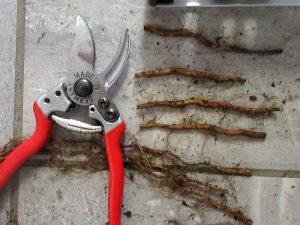clean, sharp pruning tool