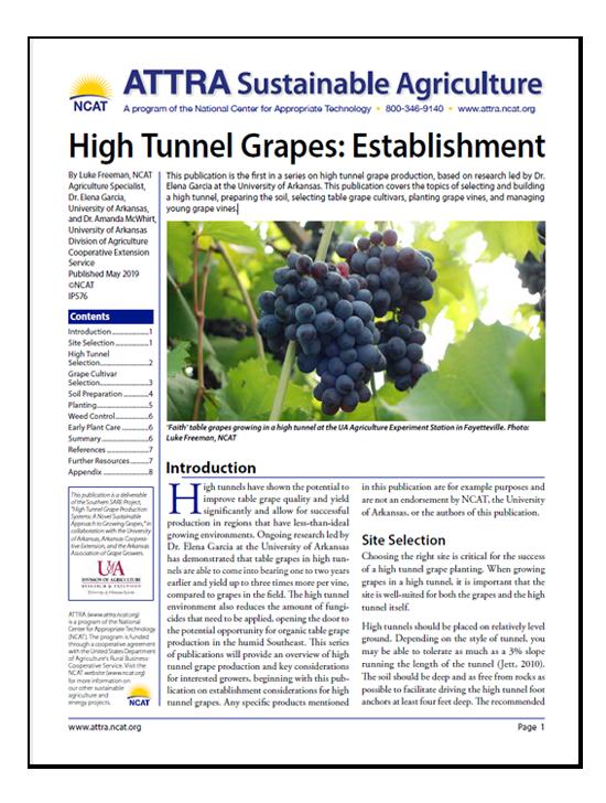 High Tunnel Grapes: Establishment