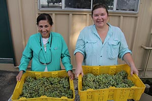 Two women holding shallow bins of grapes.