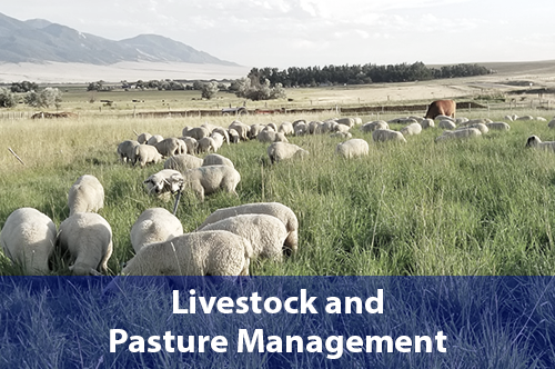 livestock-and-pasture-management