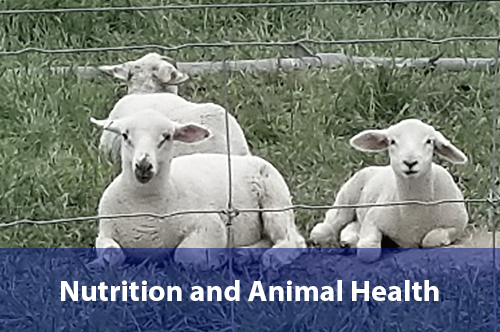nutrition-and-animal-health